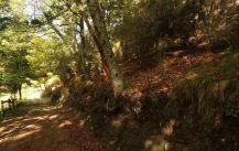Senda Verde San Martin de Oscos (3)